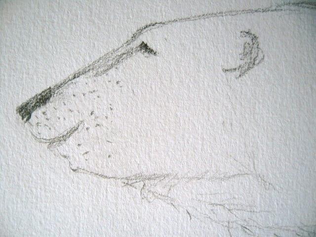 Du siehst einen Eisbären mit Bleistift gezeichnet
