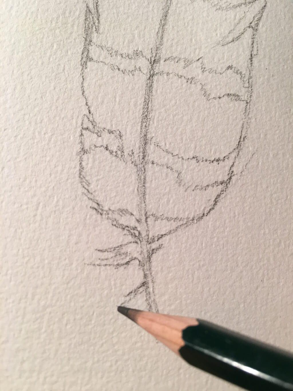Umrisslinien mit Bleistift zeichnen