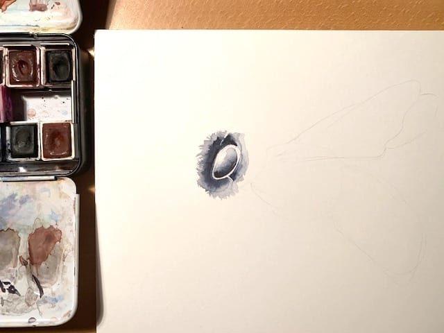 Das Auge entsteht